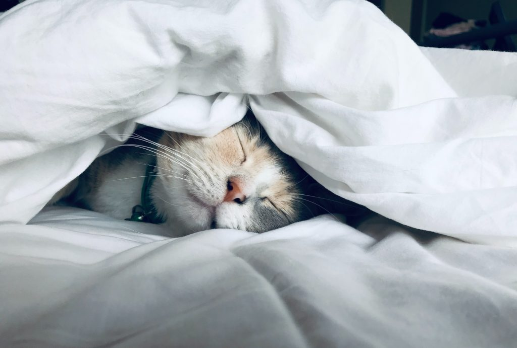 A kitten sleeps on a bed under a white blanket